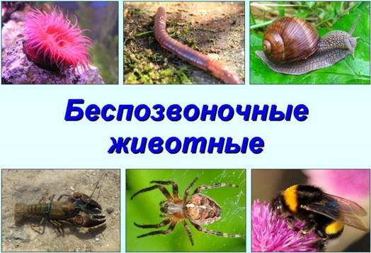 Контрольная работа по биологии в классе Беспозвоночные животные